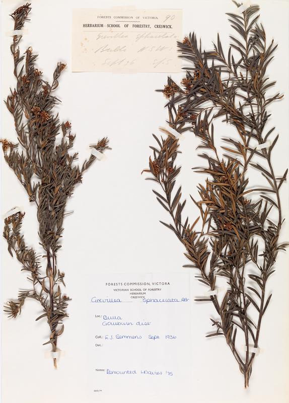 herb26.jpg