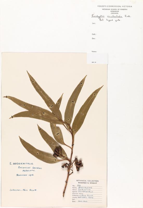 herb22.jpg