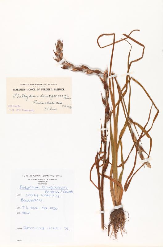 herb33.jpg