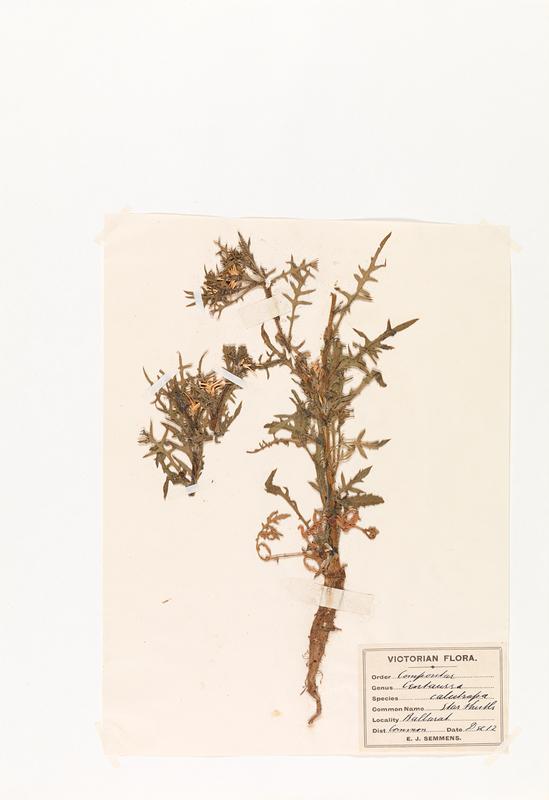 herb17.jpg