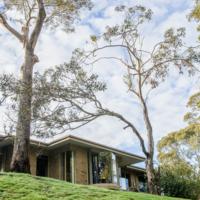 8. Eucalyptus leucoxylon (yellow gum).