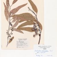 herb24.jpg