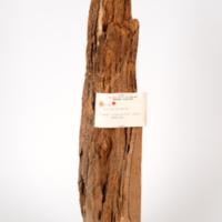 Heart rot in a gum log