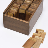 South East Asian Wood samples in box